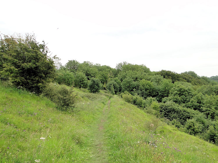 Coaley Wood