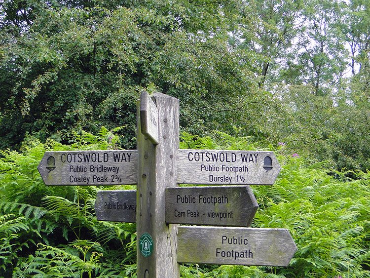 Paths in all directions near Coldharbour Farm