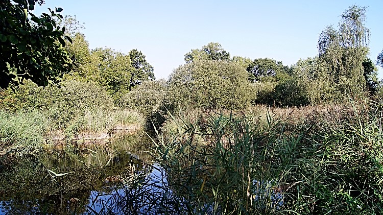 Breed Fen