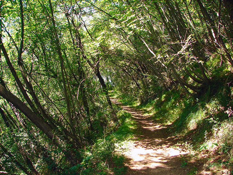 The woodland track from Rogolone to Bosco Impero