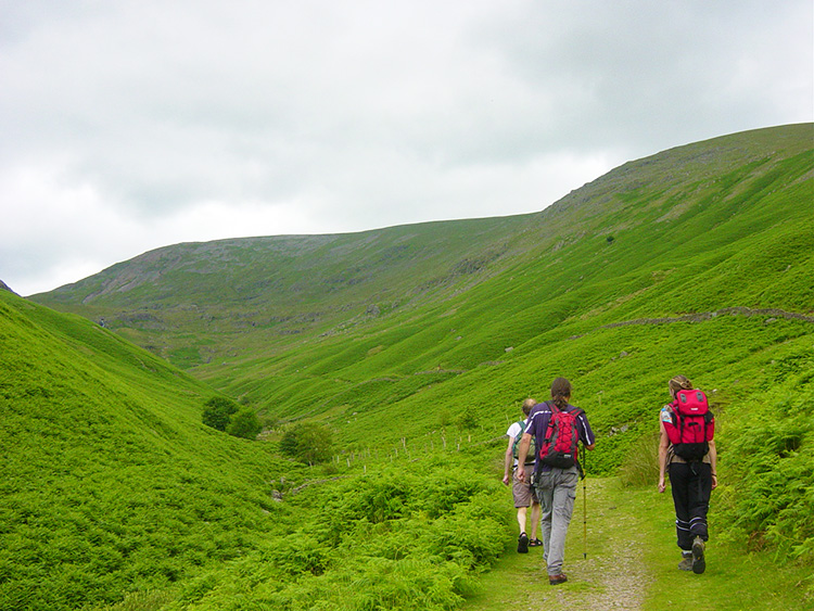 Following the Tongue Gill path