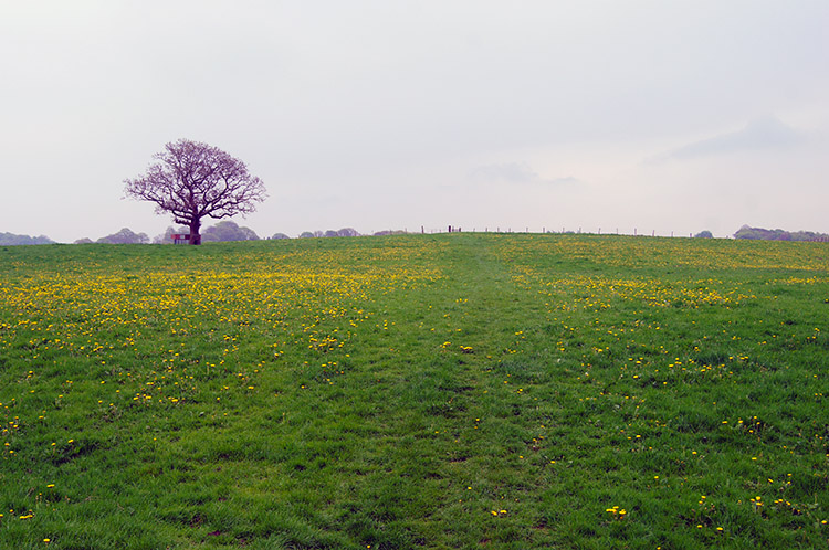 Flower meadow near Read Old Bridge