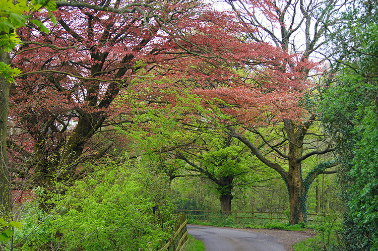 Spring colour near Worsaw End House