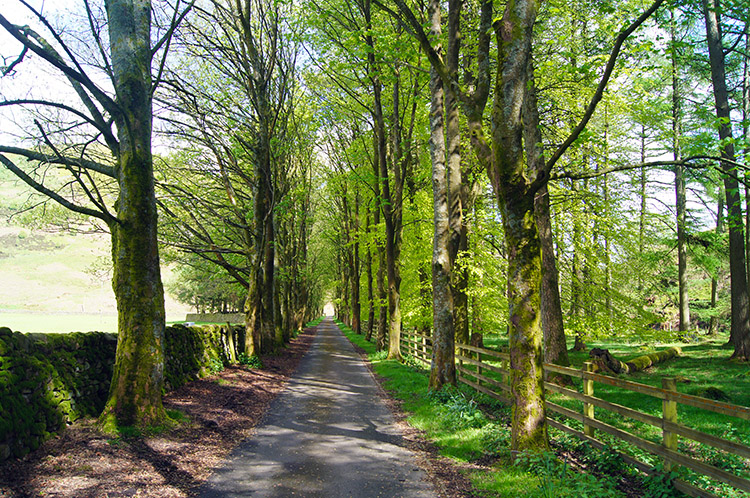 Tree lined avenue to Langden Water Works