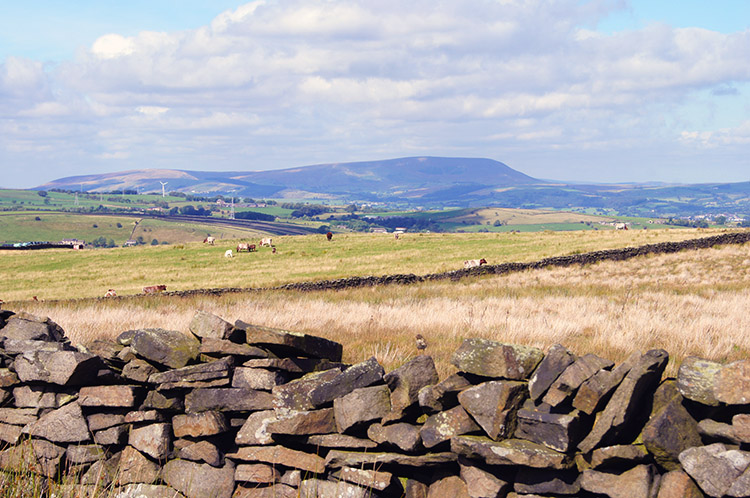 View north west across Trawden Moor to Pendle Hill