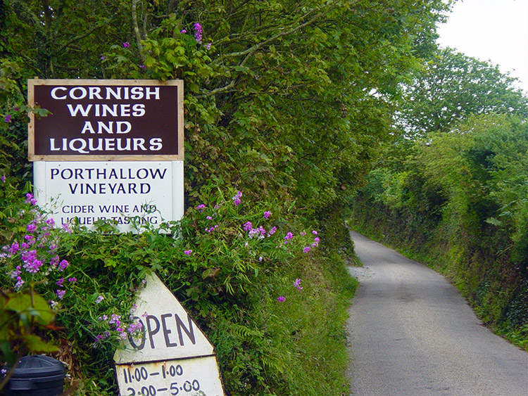This vineyard can be found near Porthallow