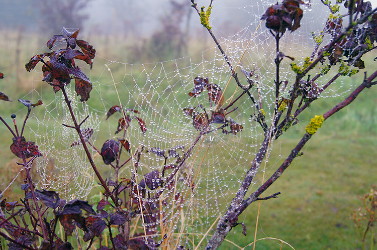 Spider's webs exposed by morning dew