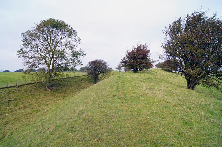 The bank of of Segsbury Camp/ Letcombe Castle
