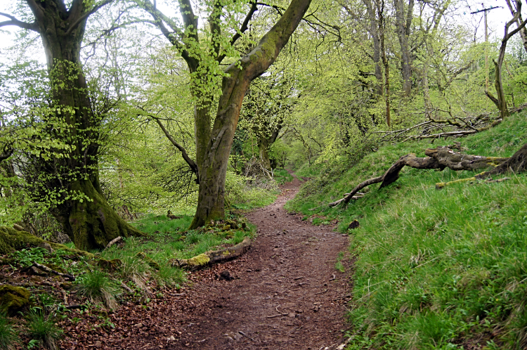 Woodland trail near Ridgeway Golf Club