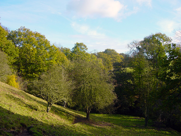 Countryside near Timble Gill Beck