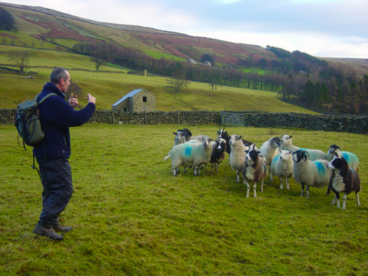 Steve shows off his shepherding skills near Woodale