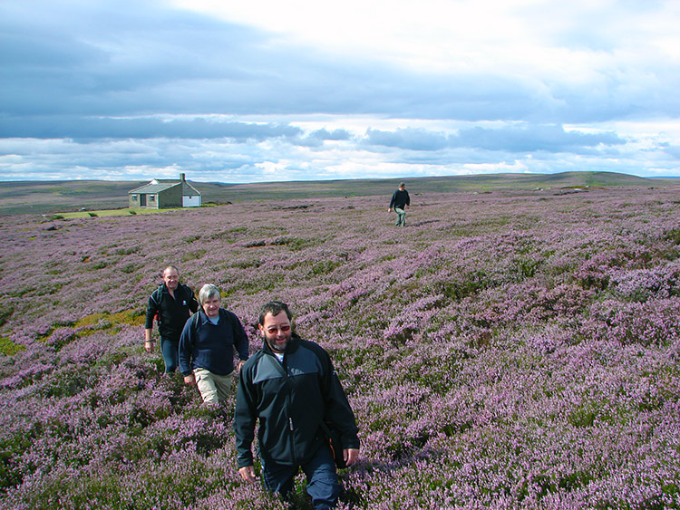 Heather in bloom on Kirkby Malzeard Moor