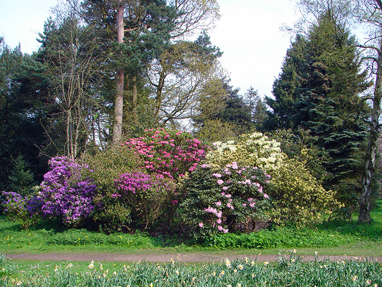 Blazes of colour in Valley Gardens