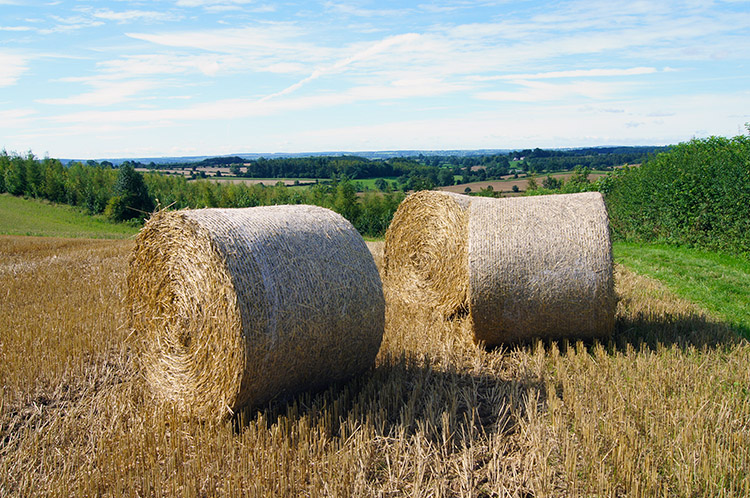 Straw for bedding this winter