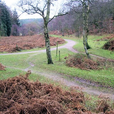 Popular paths on Cannock Chase