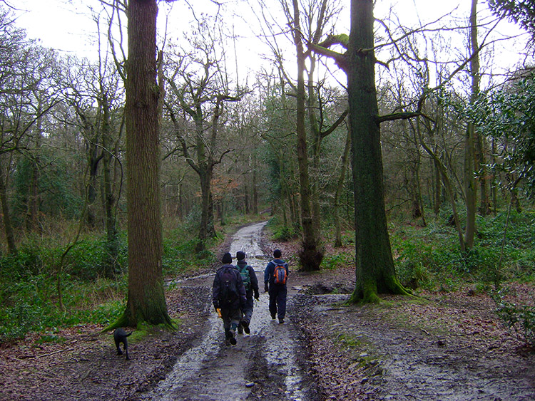 Swithland Wood