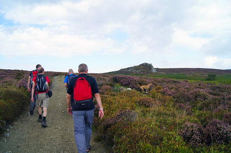 Climbing to Stiperstones