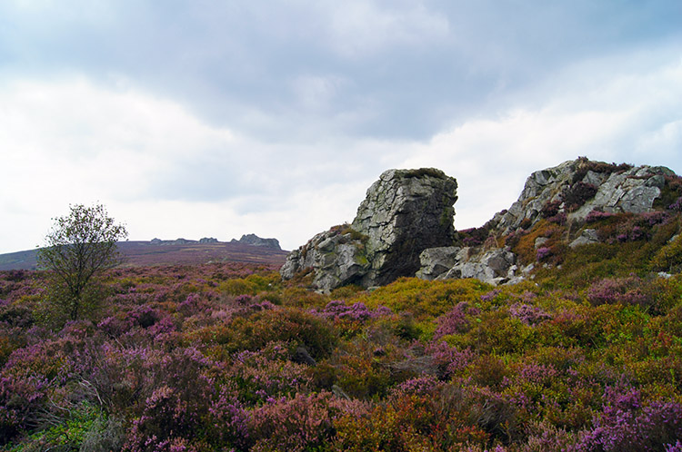 Sedimentary Quartzite on Heather Moor