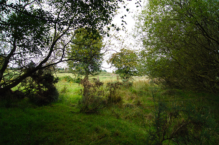 Small copse near Knolls Farm