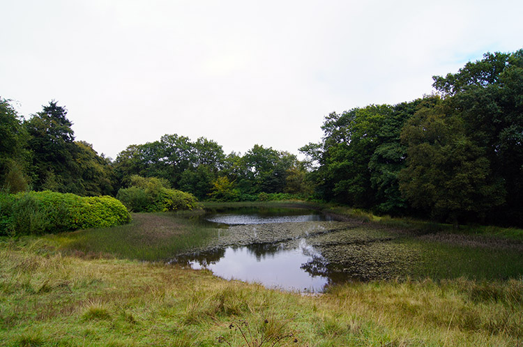 Pool in Wooler's Wood