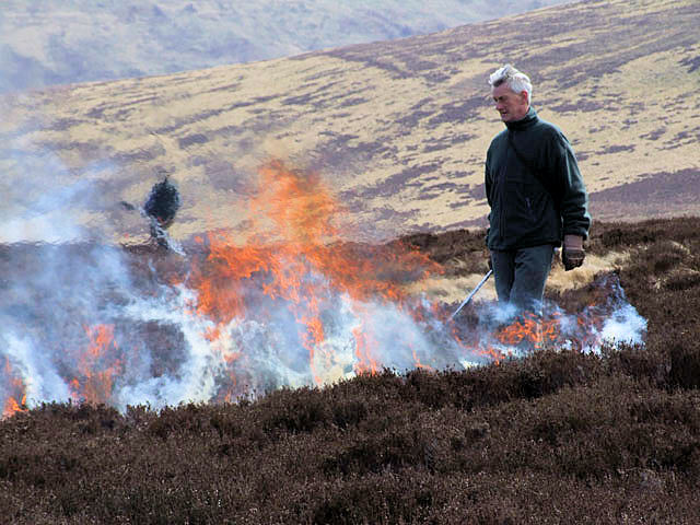 Burning the heather