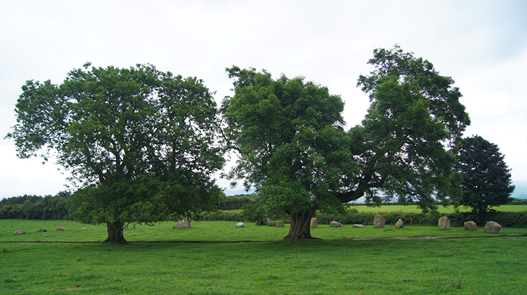 Impressive Oak Trees inside the circle
