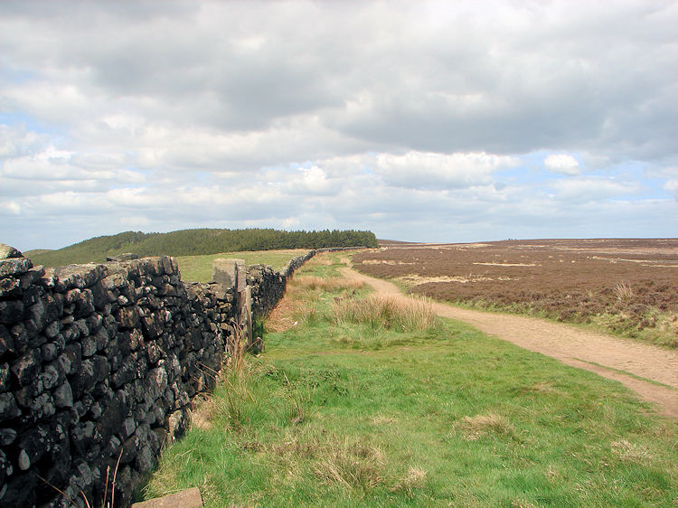 Great Ayton Moor