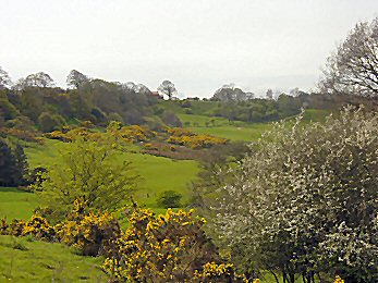 Countryside near Roxby in spring colour