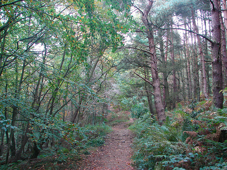 Arncliffe Wood