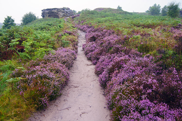 Heather lined path to the Bridestones