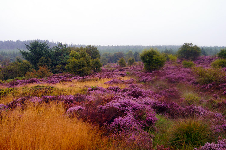 Late summer moorland colour
