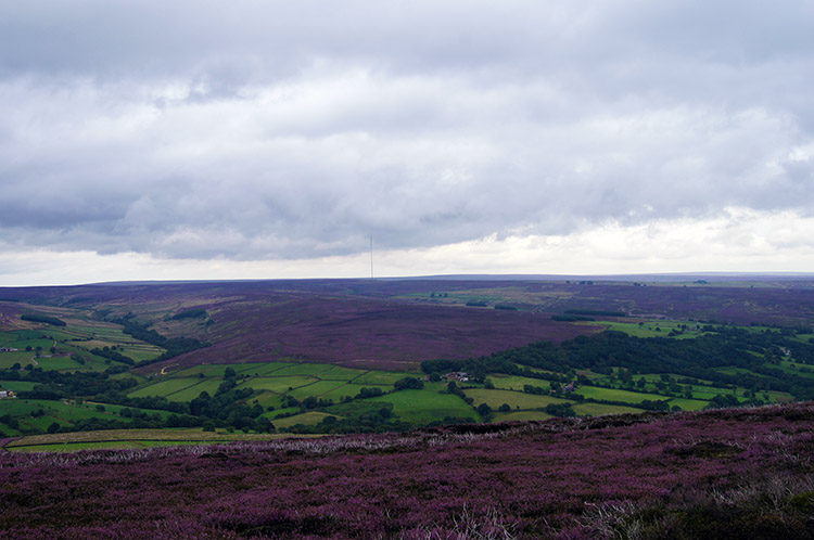 View to Bilsdale Moor from Sun Bank