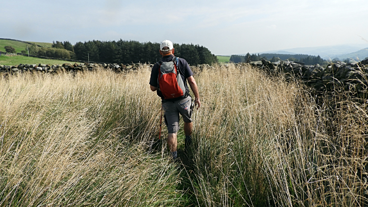 Ronnie walks the long grass to Intake Farm