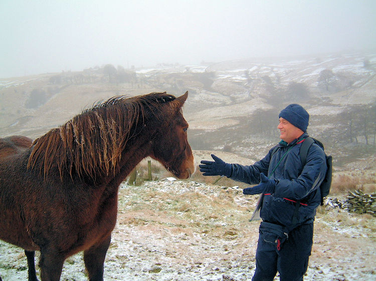 Friendly horse at Brand Top