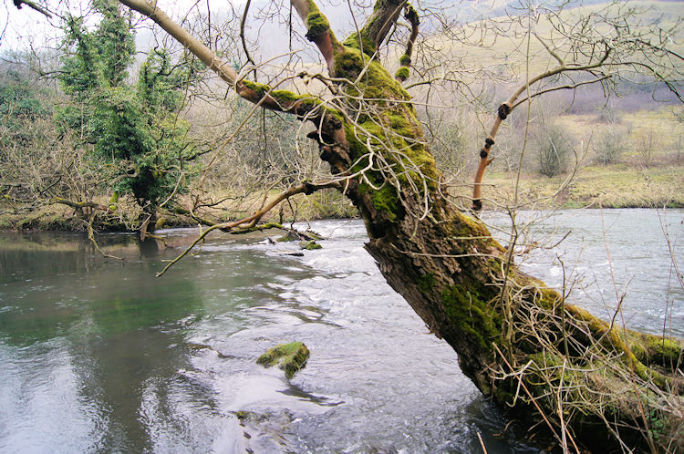 Trees overhanging the meandering river