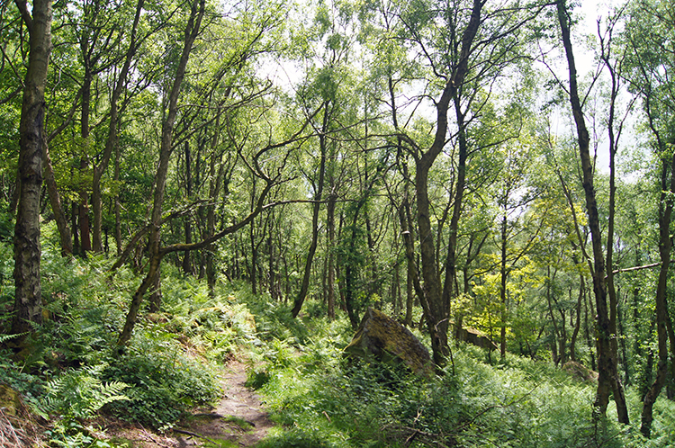 Woodland sheltered by Curbar Edge