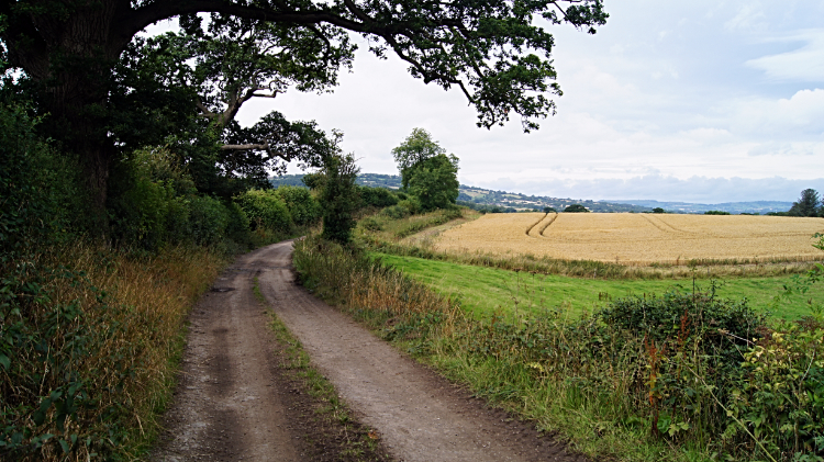 Bridleway leading to Bishop's Castle