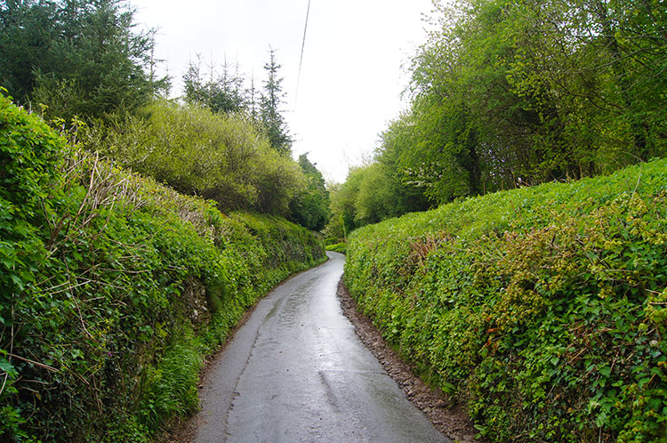 Hedgerows beside the road to Sugar Loaf from Llangenny