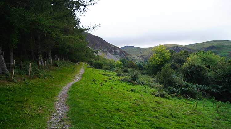 The path leading into the plantation