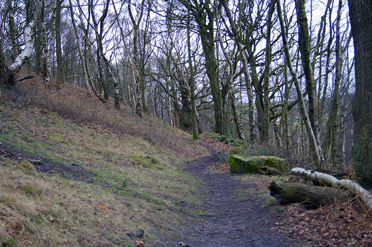 Crag Wood near Harden