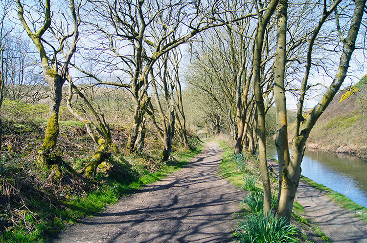 Pleasant woodland trail beside the canal