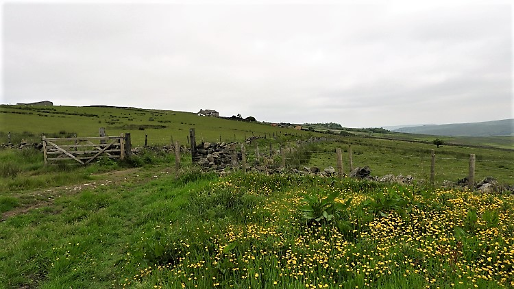 Whirlaw Common