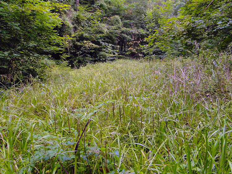 Lush grass in a woodland glade near The Buckholt
