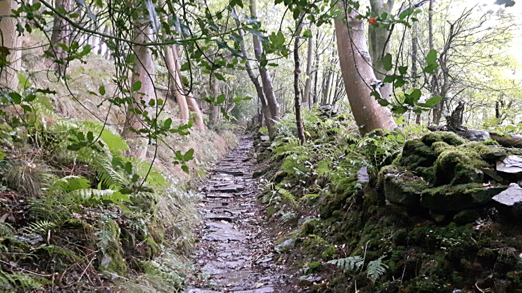 The steep path climbing through Steps Wood