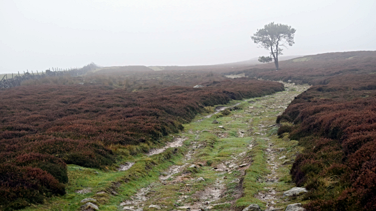Path on Fremington Edge