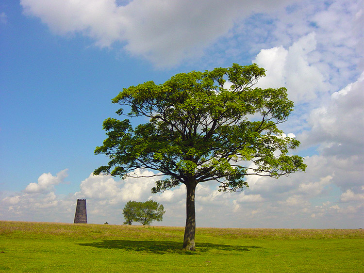 Windmill and Tree on Beverley Westwood
