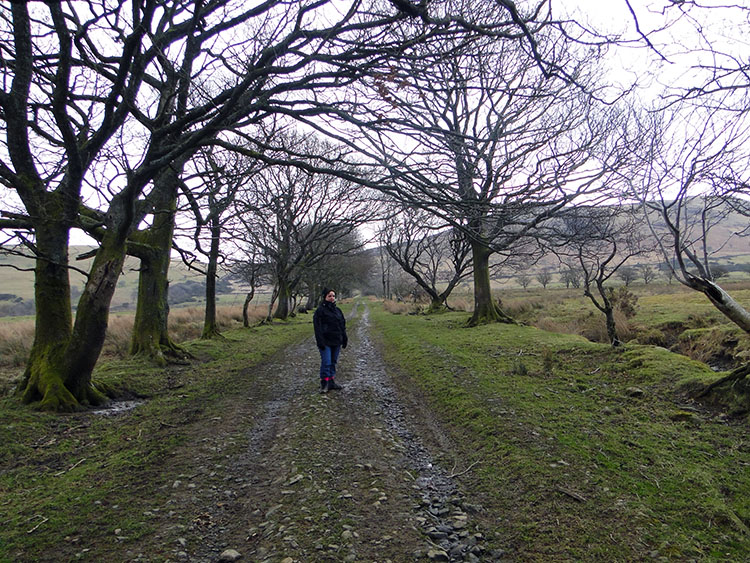 Walking up the bridleway towards Binsey