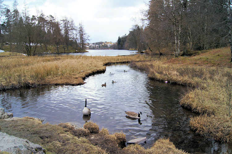 Tarn Hows attracts lots of wildlife