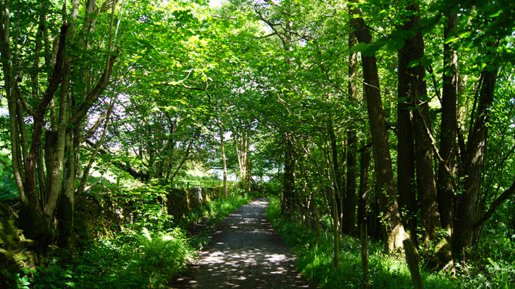 Woodside lane leading to Windermere