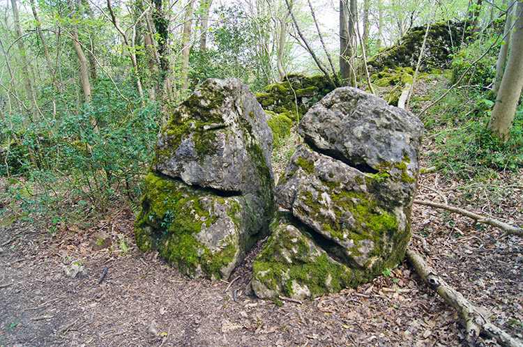Marked boulders beside the woodland path